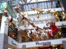 Guides a reindeer caravan with carriage and Santa Claus