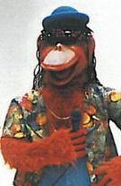 Reggae Affenband