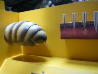 Bee abdomen and sting