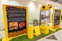 Schautafeln Bienenausstellung Stück
