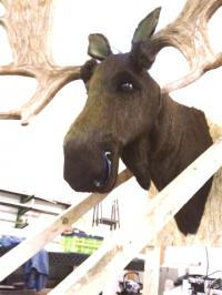 Elk head talking electric Model 2016 (used as leasing reclaimer)