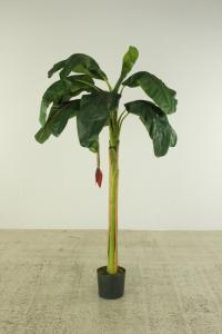 Banana tree with fruit stand