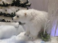 Eisbär 65 cm